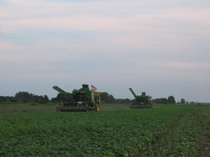 Welcome To Vogel Engineering Cucumber Harvester